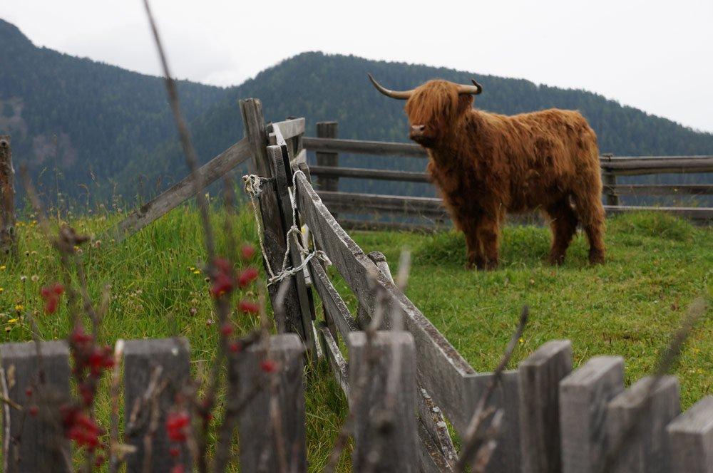 Il nostro agriturismo nel cuore dell'Alto Adige – Chi Plans